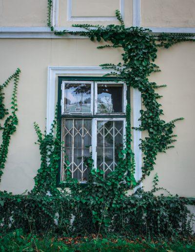 verwachsenes Fenster eines Badner Hauses in der Vöslauerstrasse