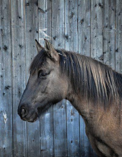 Pferd im Prieseregg Hüttendorf